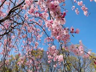 春ですね! 2